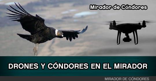 Drones y aves